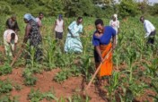 Farm equipment for rural Ugandan tribe