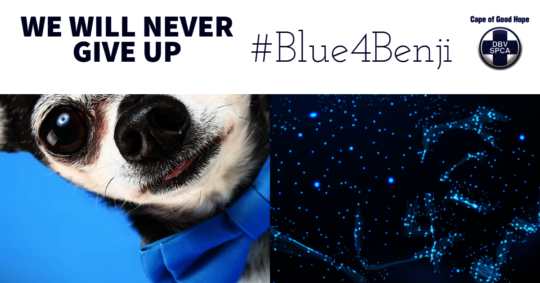 Blue4Benji