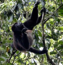 Help La Reserva Grow Forests, Costa Rica