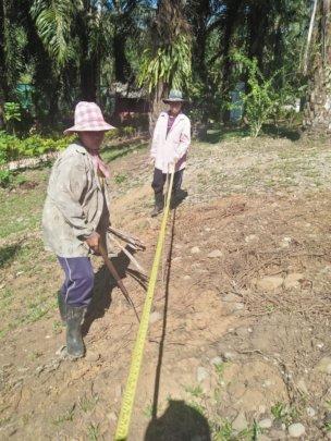 Careful Measurements for Future Saplings