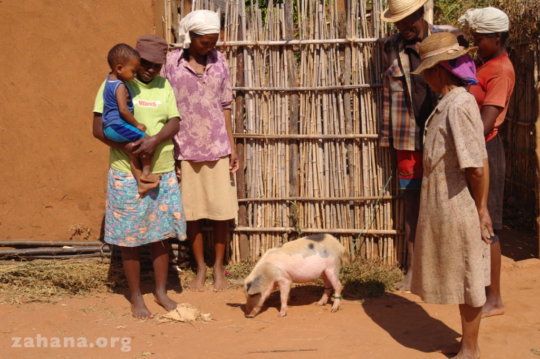 Taking piggy for a walk in the hood