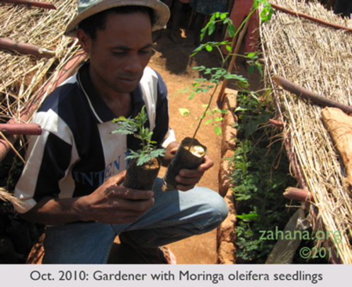 July 2010: Zahana's 2nd Gardner growing Moringa