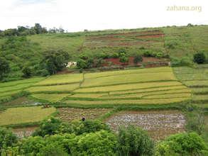 Rice Paddy in Fiarenena Madagascar