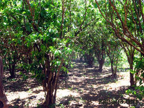 "The ""old"" coffee plantation that inspired us"