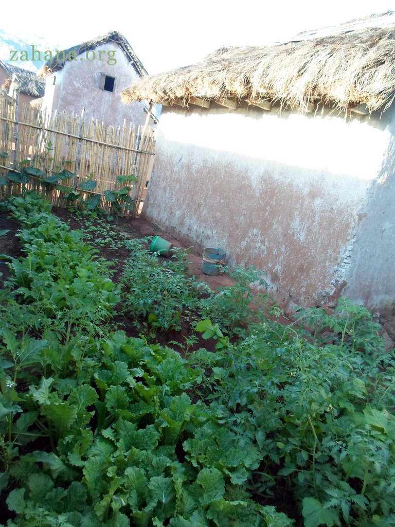 Growing food next the the home