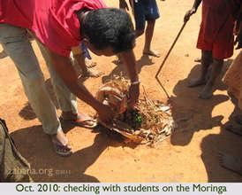OCT 2010: Planting Moringa in schoolyard