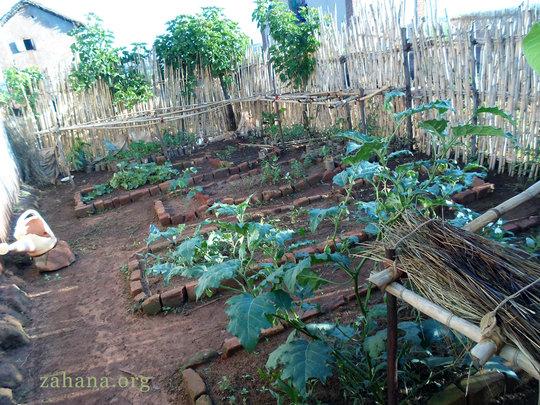 Growing Vegetables Dec 2013