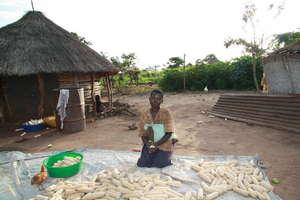 preparing maize