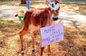 Purchase a land & construction for preserve of cow