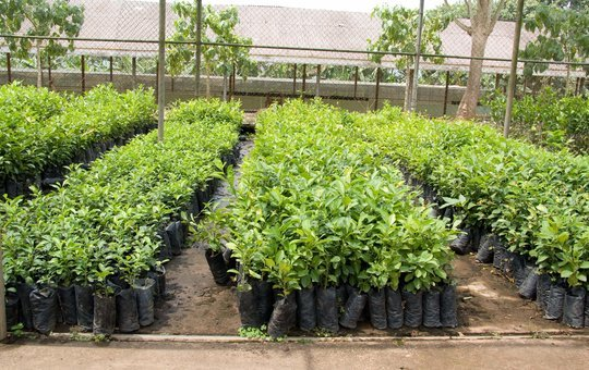 We buy fruit and tree seedlings from Uganda