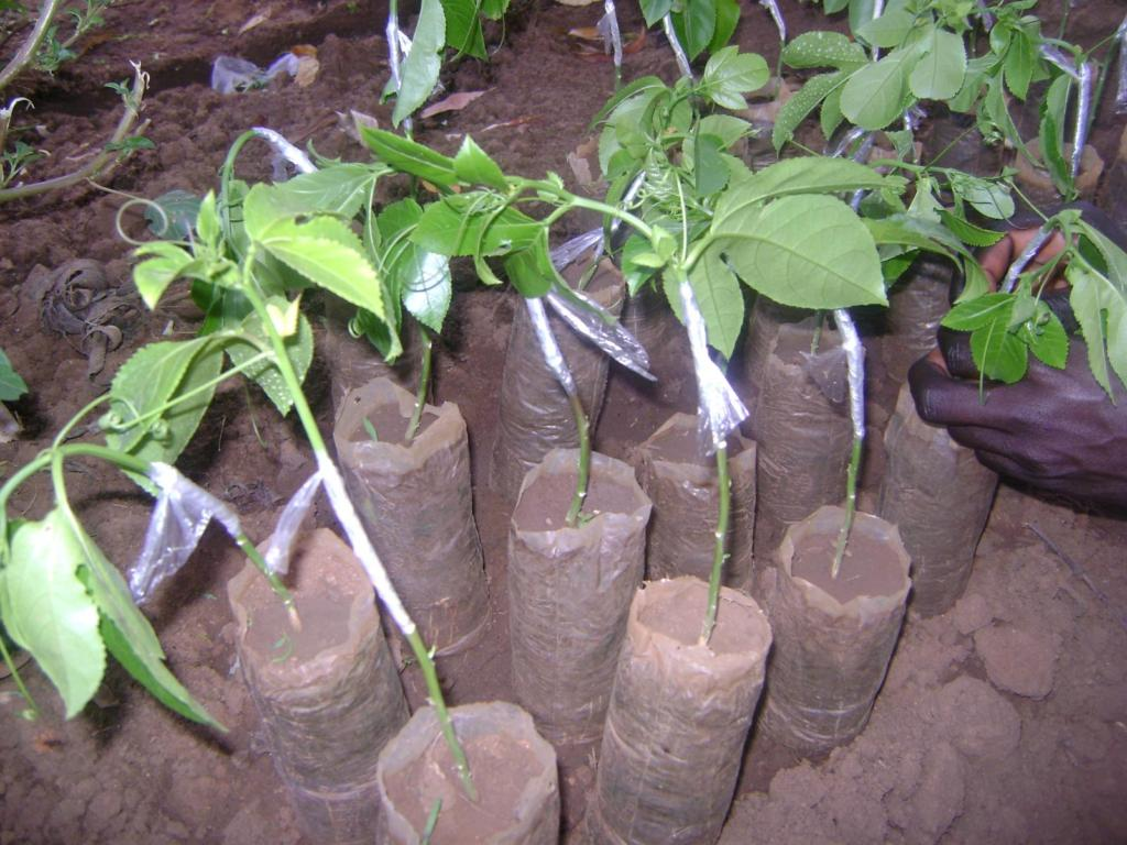 We are planting because of you!