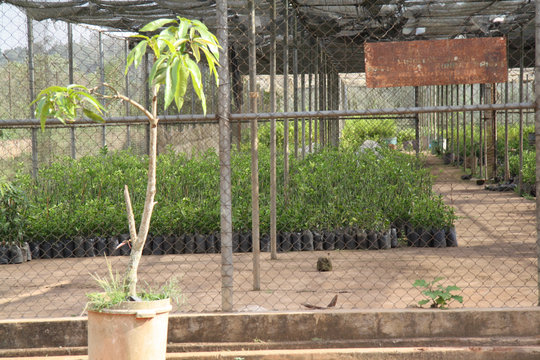 Nursery - where we buy tree seedlings