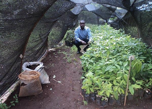 Avocado seedlings needed in South Sudan