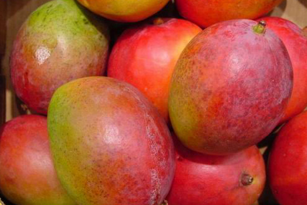 Give Fruit and a Greener Environment (South Sudan)