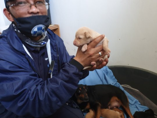 Safe and Warm at the SPCA