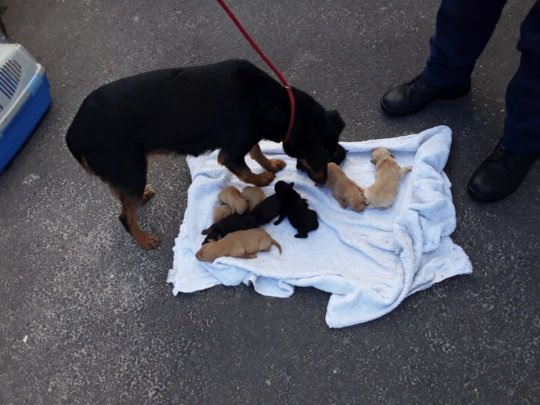 All 10 safely rescued