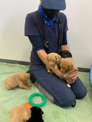 Puppy enrichment classes with our behaviourist