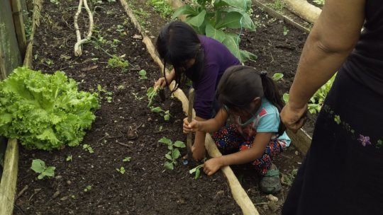 Monitoring of home gardens