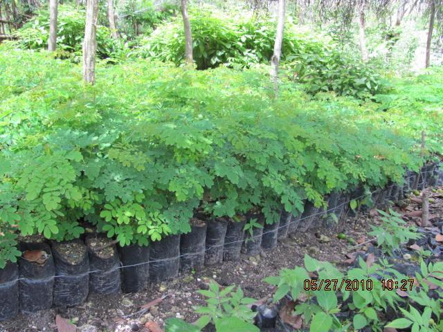 Healthy seedlings!