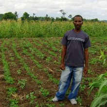 Haitian farmer standing among his crops