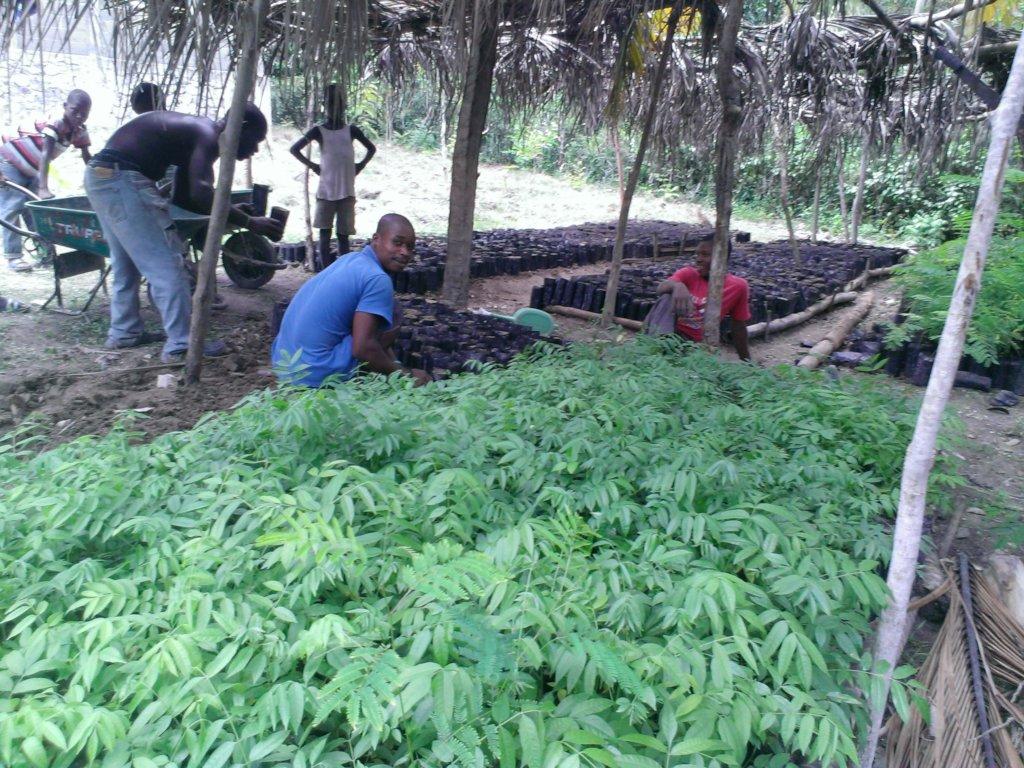 building nurseries for reforrestation in Haiti