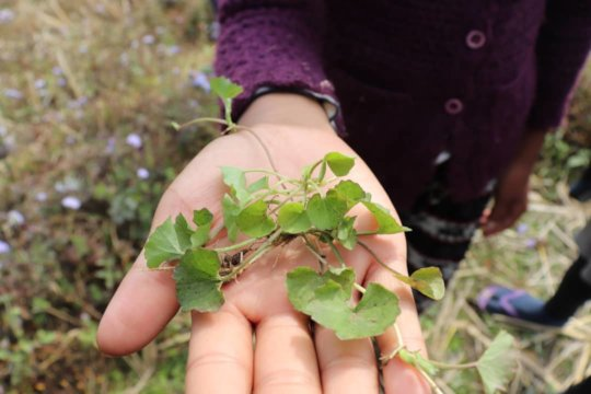 Herbs from biodiversity walk with Faith Foundation