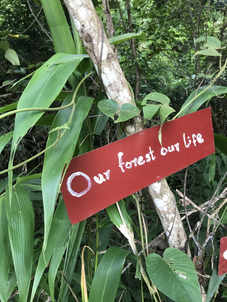 Protecting Forests & Indigenous Rights in Myanmar