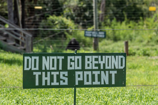 Strict guidelines for our chimpanzee sanctuary
