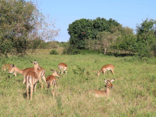 Peaceful grazing tells of no poaching.