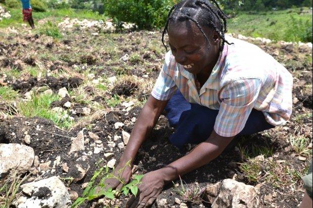 Woman planting trees
