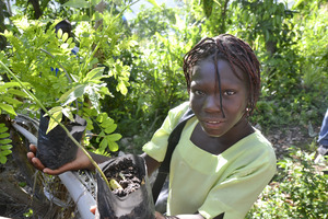 Planting trees to stabilize soil in Haiti