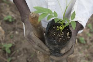 Farmer shows plant's healthy beginning