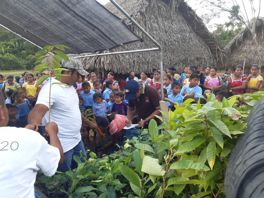 Community distribution of seedlings