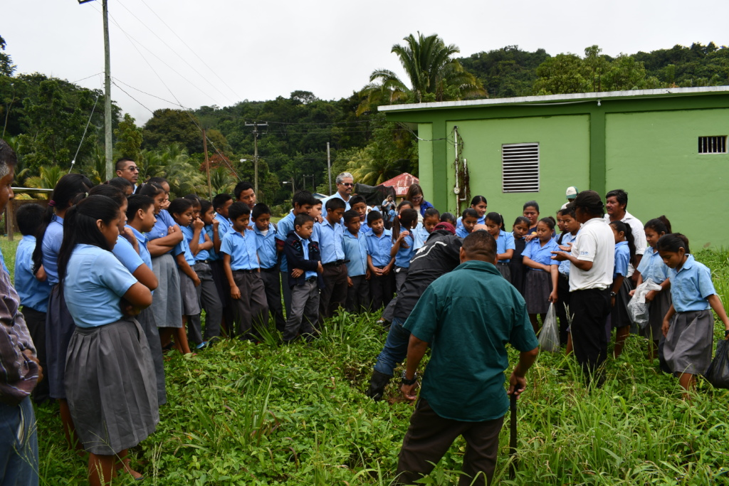 School tree planting campaign