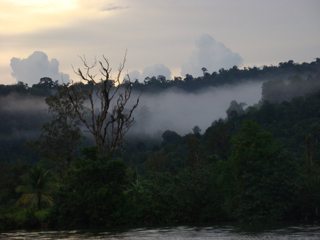 Empower Rural Communities and Help Protect Forests