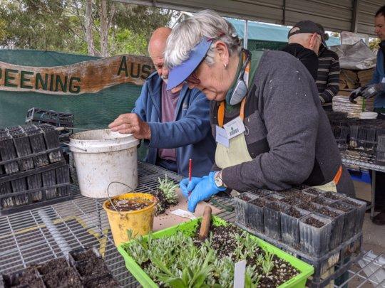 Bushfire-Recovery-Nursery-seedling-planting