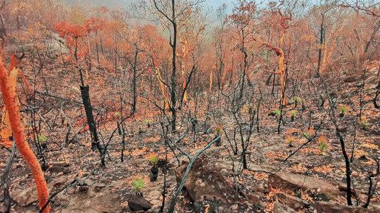 Burned-land-Photo-Carol Carter-&-Allan-Chawner