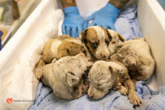 Pic. 6 - The Tick Puppies Before