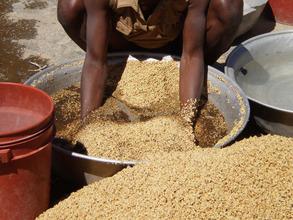 Transformed Millet
