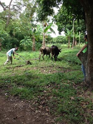 Build Community-Run Enterprises in Rural Haiti