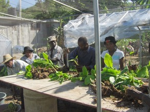 Working at the Center for Plantain Propagation