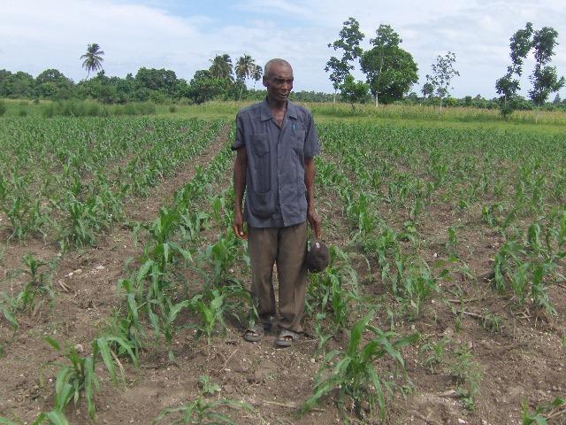 A Haitian Farmer shows off his healthy crops