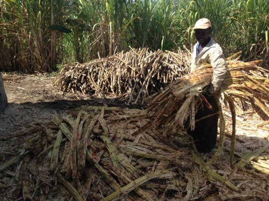 """Bagas"" using cane by product for fuel"