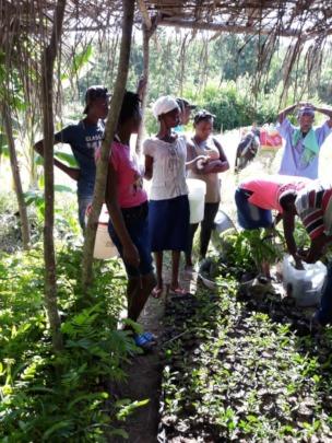Tending to the seedlings