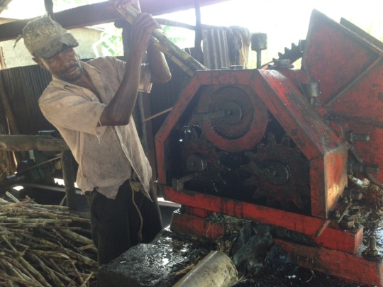 Daily work of processing sugar cane