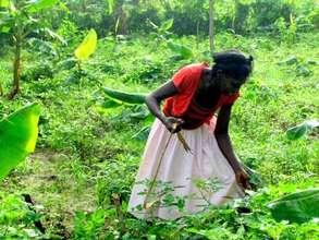 Woman farmer in Haiti