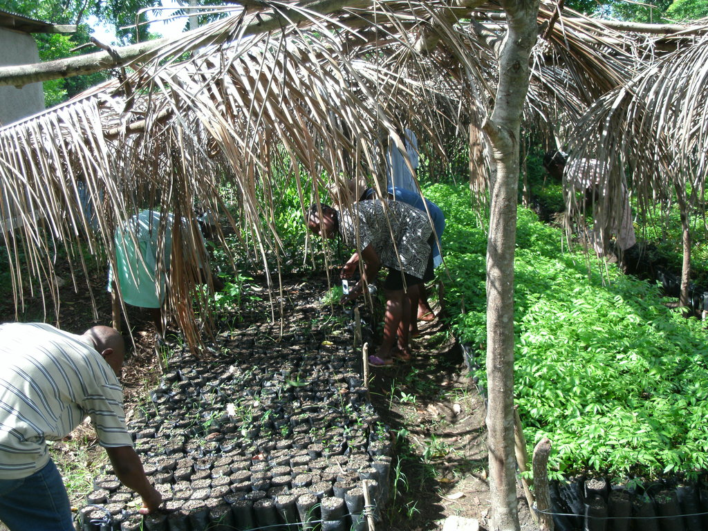 Learning to plant seedlings for reforestation