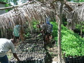 Learning to plant seedlings for reforestation