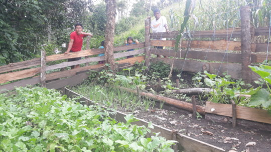 Family garden with short cycle vegetables