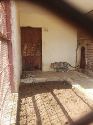 At Sana'a Zoo